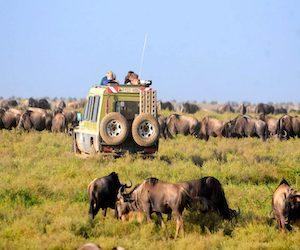 dostupnye_mesta_dlya_afrikanskogo_safari