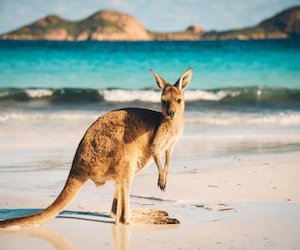 kenguru_ugrozhayut_nacionalnym_parkam_po_vsej_avstralii