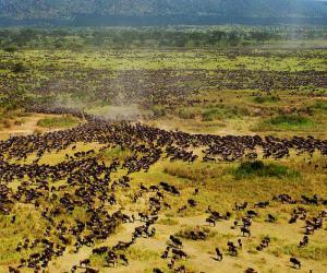 nacionalnyj_park_cavo_v_kenii