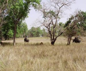 nacionalnyj_park_kanxa_v_indii