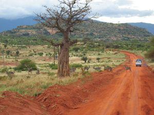 nacionalnyj_park_ndere_v_kenii