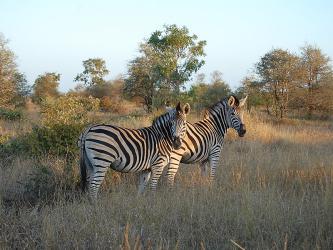 nacionalnyj_park_salonga_v_afrike