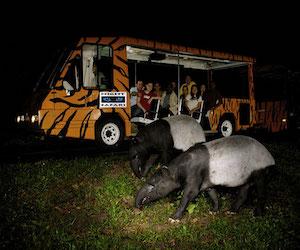 nochnoj_safari_v_parke_tailanda